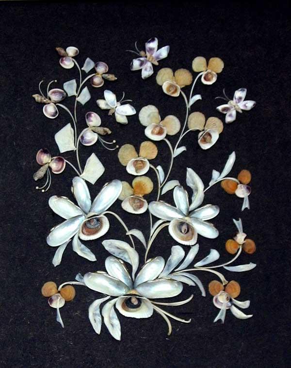 ракушки-орхидеи