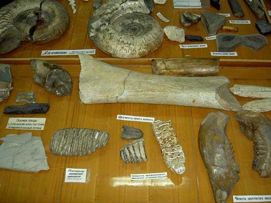 Кости древних гигантов